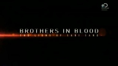 Прирожденные короли / Brothers in Blood: The Lions of Sabi Sand (2015) Discovery