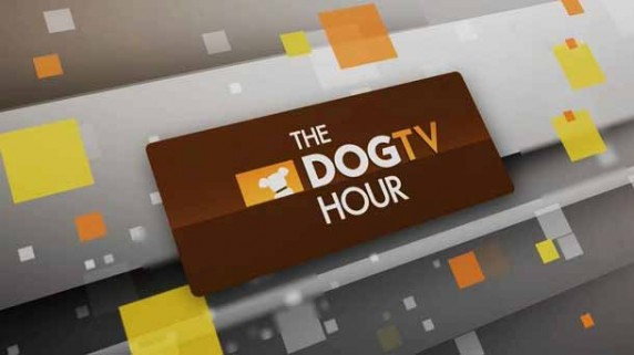 Пёс-ТВ 2 серия / The Dog TV Hour (2016)