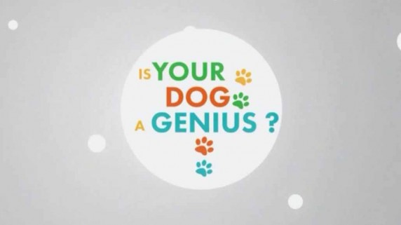 Насколько умна Ваша собака? 2 серия. Собачий ум / Your dog genius? (2014)