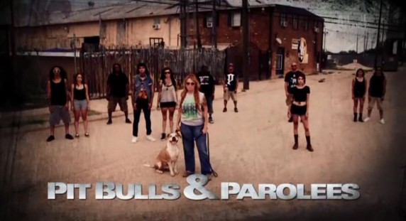 На свободу с питбулем 7 сезон: 13 серия. На работу в тюрьму / Pit Bulls and Parolees (2016)