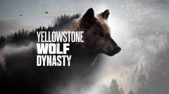 Волчья династия Йеллоустоуна: Битва за Волчью долину / Yellowstone Wolf Dynasty (2018)