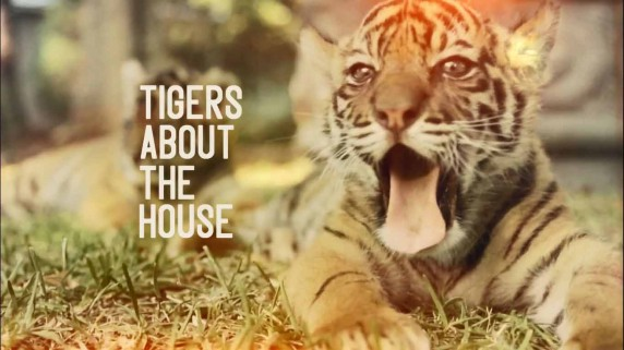 Тигры в доме 1 серия / Tigers About the House (2014)