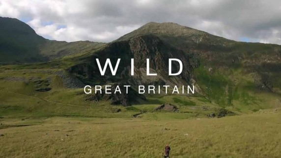 Дикая природа Великобритании 4 серия. Деревня и город / Wild Great Britain (2018)