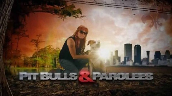 На свободу с питбулем 9 сезон 03 серия. Братская помощь / Pit Bulls and Parolees season (2018)
