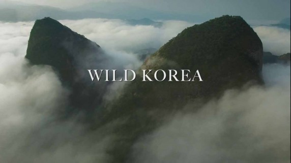 Дикая Корея 2 серия. За границей / Wild Korea Return of the wild (2018)