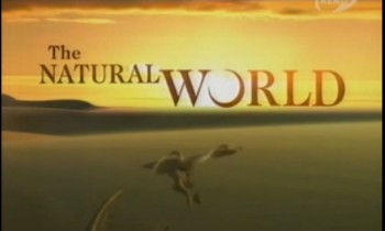 BBC Мир природы. От динозавров до плотин / The Natural World. Grand Canyon: From Dinosaurs to Dams (1997)