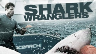 Акульи Пастухи / Shark Wranglers 02.  Бухта Свирепых акул. Bay of the Fighting Sharks (2012)