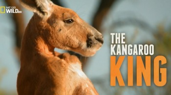 Король кенгуру / The Kangaroo King (Беттина Далтон / Bettina Dalton) (2015)