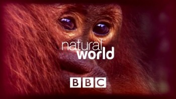 Большие птицы с Дэвидом Аттенборо / BBC Natural World: Attenborough's Big Birds (2015)