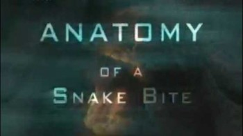 Анатомия змеиного укуса / Anatomy of a Snake Bite (2004)