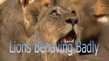 Львы-хулиганы / Lions Behaving Badly (2005)