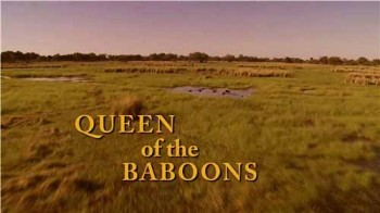 Королева бабуинов / Queen of the Baboons (2015)