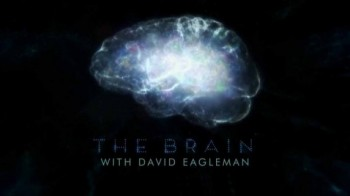 Мозг с Дэвидом Иглманом 4 серия / The Brain with David Eagleman (2015)