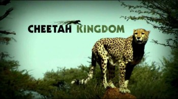 Царство гепардов 1 серия / Cheetah Kingdom (2010)