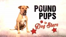 Дорога из приюта 2 сезон 3 серия / Pound pups to Dog stars (2015)