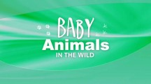 Детеныши в дикой природе 6 серия. Детёныши африканской саванны - день / Baby animals in the wild (2015)
