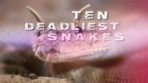 Десять смертельно опасных змей 1 серия. Аравия / Ten deadliest snakes (2016)