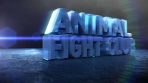 Бойцовский клуб для животных 3 сезон 1 серия. Серьёзные разборки / Animal Fight Club (2015)