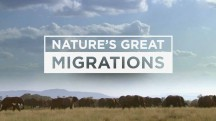 Великие миграции в природе 3 серия. Зебры / Nature's Great Migrations (2016)