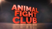 Бойцовский клуб для животных 5 сезон 6 серия. Победитель получает всё / Animal Fight Club (2016)