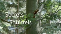 Беличьи секреты / Secrets of Squirrels (2018)