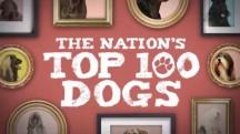 100 самых популярных пород собак 3 серия / The Nation's Top 100 Dogs (2017)