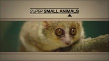Звери в миниатюре / Super Small Animalsп (2017)