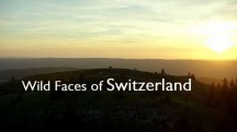 Дикая Швейцария 4 серия. Зима в швейцарских Альпах / Wild Faces of Switzerland (2018)